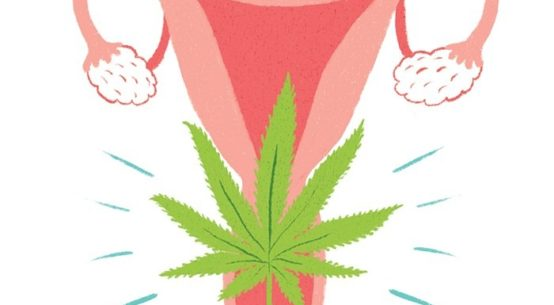 A cartoon drawing of a uterus has a cannabis leaf superimposed
