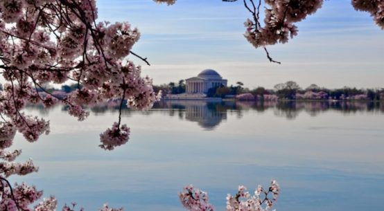 A photo of the Total Basin framed by Cherry blossoms